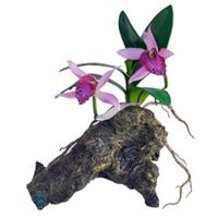 Zoo Med Orchid with Rock, BU-48E