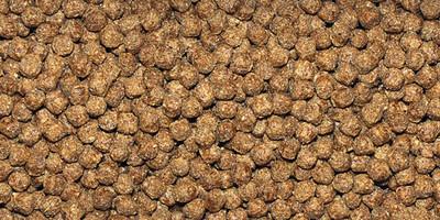 Dajana Repti Gran корм для водных черепах, 100г (пакет)