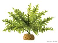 Hagen ExoTerra Boston Fern – Small PT-2990