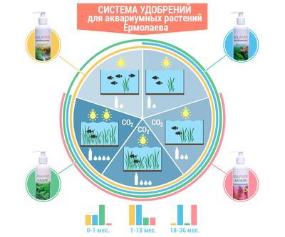 Инфографика Ермолаева