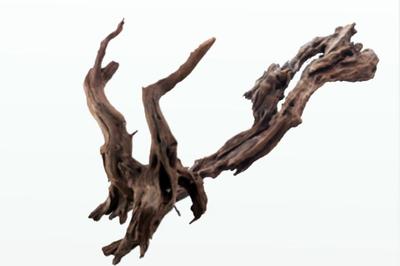 Корень ikebana Amtra 20-30 см