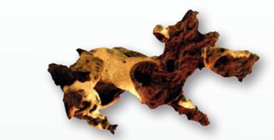 Корень mopani  Amtra 15-30 см - африканское дерево твердых пород