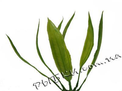 Растение Hagen Marina Amazon (Амазон) PP-501, 13 см