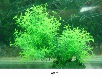 Растение Lang №02020