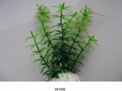 Растение Lang №021062