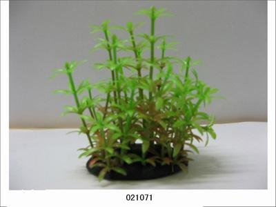 Растение Lang №021071