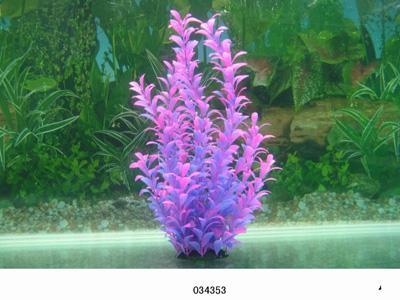 Растение Lang №035433