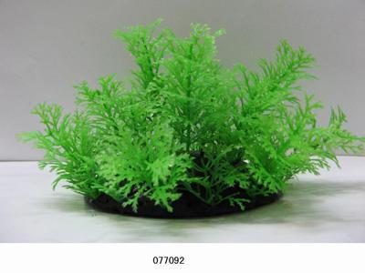 Растение Lang №077092