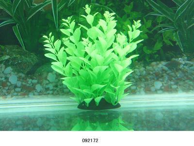 Растение Lang №092172