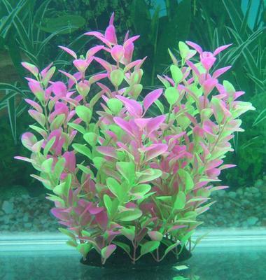 Растение Lang №094255