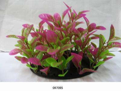 Растение Lang №097095