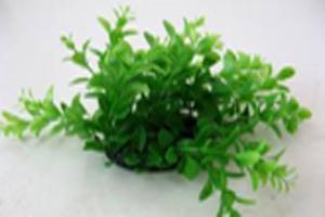 Растение Lang №097202