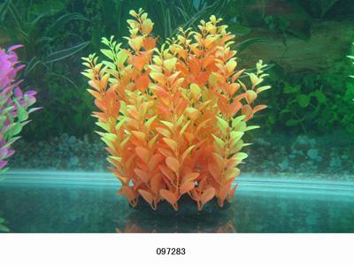 Растение Lang №097283