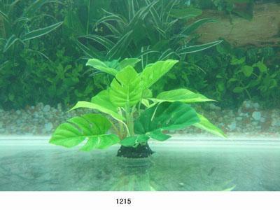 Растение Lang №1215