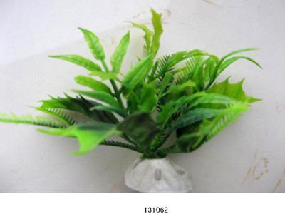 Растение Lang №131062