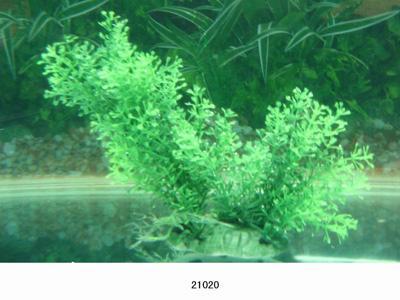 Растение Lang №21020