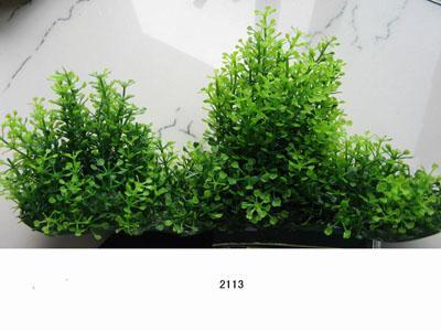 Растение Lang №2113