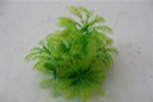 Растение Lang №380072