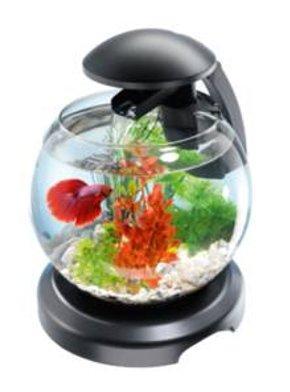 Tetra Cascade Globe - аквариум для петушка 6,8 л, 211827